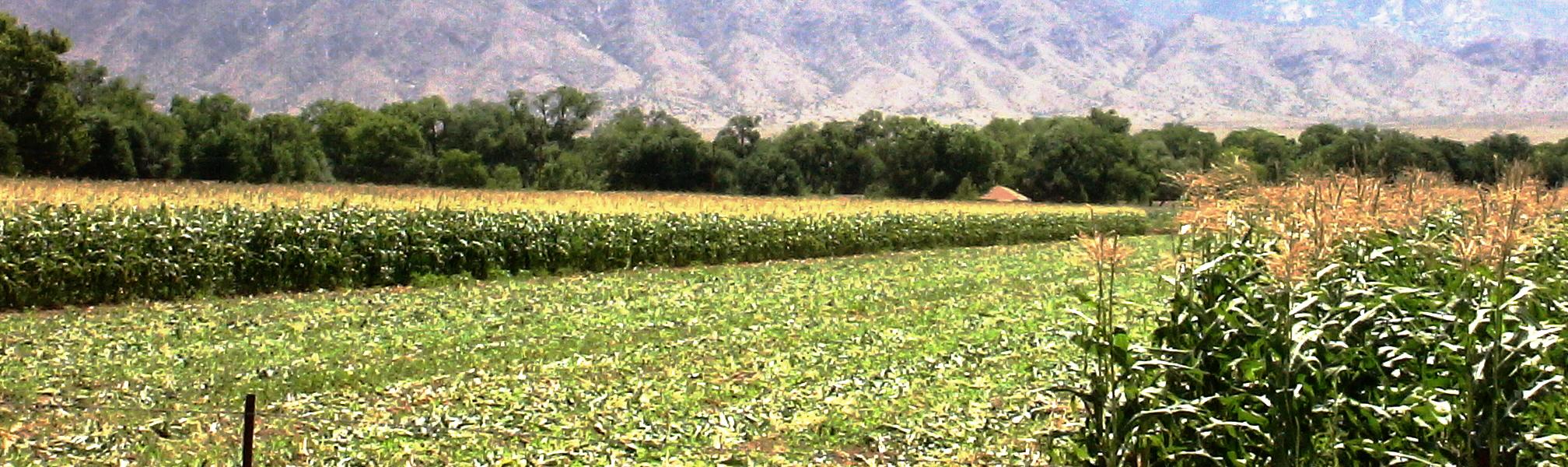 Corrales New Mexico